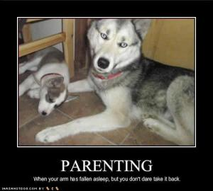 funny_dog_pictures_parenting_arm-590ff12447a564172f9472ad32259e4d
