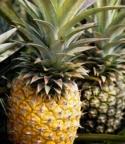Ripe Unripe Pineapples
